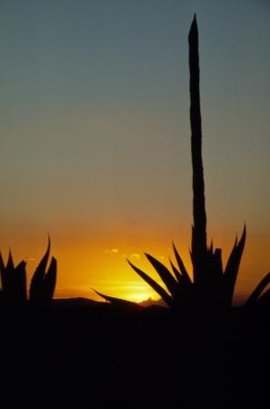 El sol poniente presenta una planta de siglo cerca de Puebla, M�xico Foto de archivo