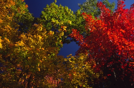 Autumn foliage flames against an azure sky