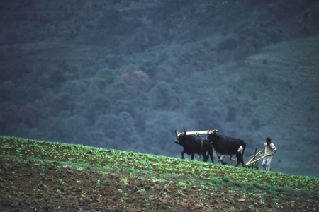 A farmer plows with oxen in a mountainous region of Latin America