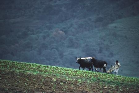 Un agricultor ara con bueyes en una regi�n monta�osa de Am�rica Latina
