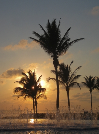 The setting sun backlights a row of palm trees and a fountain in Acapulco, Mexico  Stock Photo