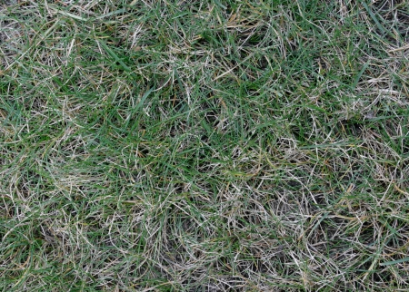Live and dead grass create an abstract pattern Banco de Imagens - 16452007