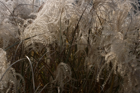 Backlit grass fronds create an abstract pattern