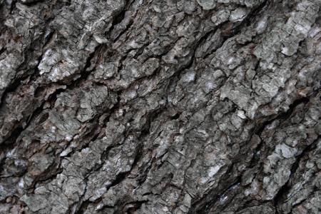 White pine bark creates an abstract pattern  Stock Photo