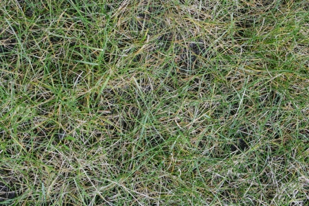 Live and dead grass create an abstract pattern