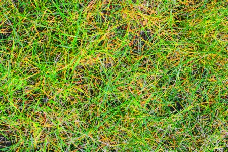 Live and dead grass create a bright and colorful abstract pattern  Stock Photo