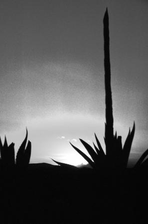 The setting sun outlines a century plant near Puebla, Mexico
