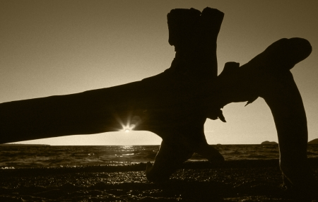 Lake Superior sunset through a skeleton log at Lake Superior Provincial Park in Northern Ontario, Canada  Stock Photo