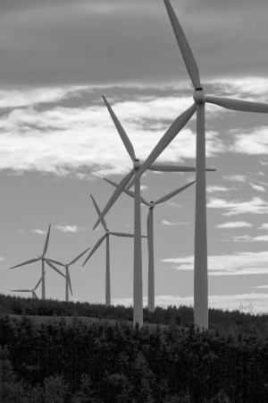 An array of wind turbines renewably converts wind into energy