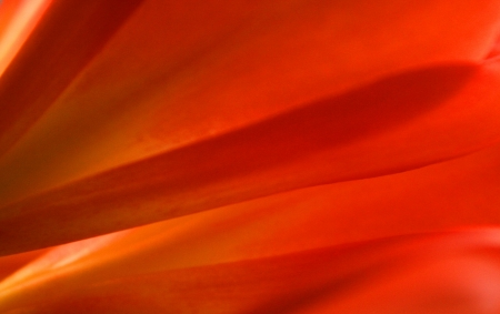 An abstract rendering of a cluster of clivia miniata blossoms announce the arrival of spring  Stock Photo