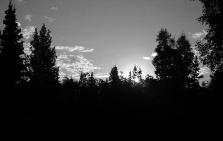 El incremento de los recortes sol en la profunda sombra de un bosque a las afueras de Anchorage, Alaska Foto de archivo
