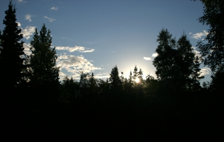 The rising sun cuts into the deep shade of a forest on the edge of Anchorage, Alaska