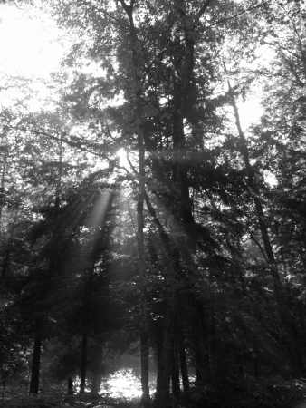 The rising sun cuts into the deep shade of a forest  Stock Photo