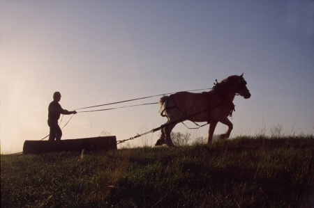 A teamster and his Belgian work horse pull a log section