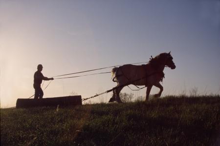 Un camionero y su caballo de trabajo belga tirar una secci�n de registro Foto de archivo
