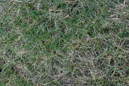 A mixture of green and dry grass creates an abstract pattern in nature