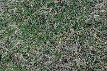 Una mezcla de hierba verde y seca crea un modelo abstracto en la naturaleza