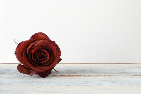 Withered red rose flower on the white wooden shelf. White background.