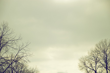 editors: A leafless tree forest against a grey moody sky. Negative space background and an empty copy space for editors text. Stock Photo