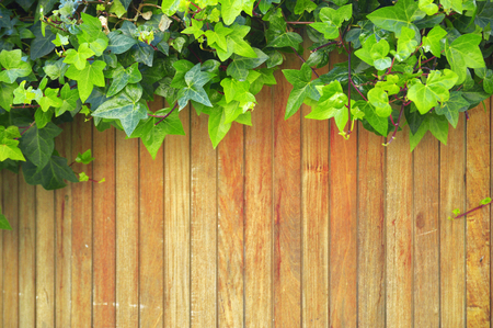 publishers: Wooden background with some ivy leaves. Natural scene. Empty copy space for Publishers text.