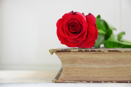 editors: Red rose on an old book. Wooden table and white background. Empty copy space for editors text. Stock Photo