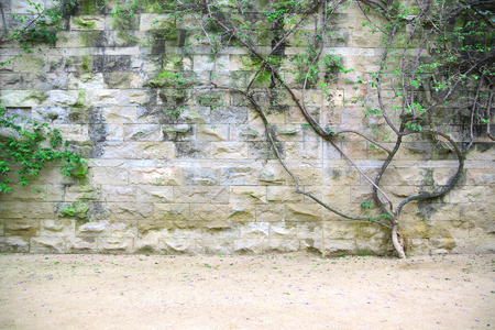 Stone wall background with a bush and green leaves. Empty copy space for Editor's text.