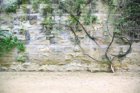 Stenen muur achtergrond met een struik en groene bladeren. Leeg kopie ruimte voor de tekst van de redacteur.