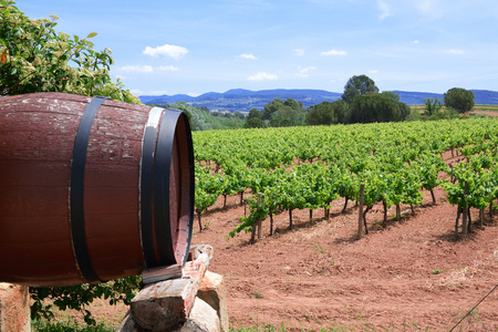 Wooden barrel against a vineyard landscape. Cloudy sky and empty copy space for Editor's text.