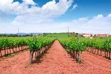 Vineyard in a red earth cultivation and green grapevines forming rows. Blue sky and some clouds with some empty copy space for Editor's text.