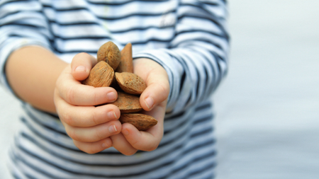 Child hands with some brown almonds against a white background. Empty copy space for Text editor.