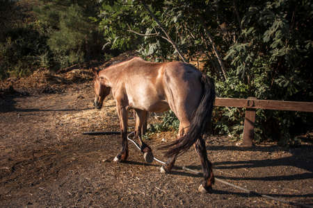 brown horse walking on a ranch
