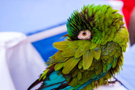 Little beautiful green parrot turned his head
