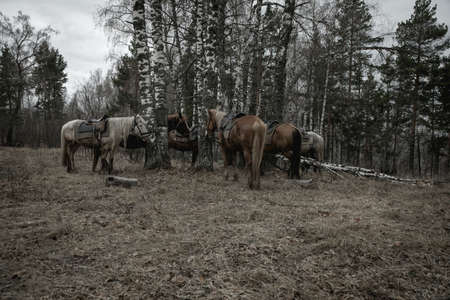 Horses stand near the trees in the forest. Gray rainy day. Beautiful forest in the rain.