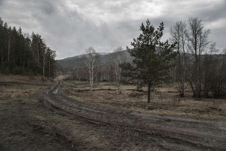 Beautiful forest in rainy gray weather. Gray sky with rain clouds. Fields and mountains. Fog.