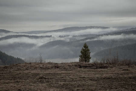 Lonely young tree and rainy landscape. Mountains, field and forest. Gray cloudy sky. A rainy evening in nature.