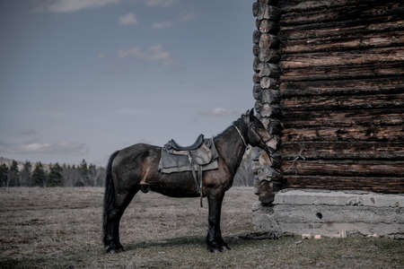 A beautiful large horse stands near a wooden house. A beautiful animal. Rural landscape.