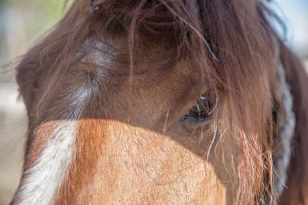 A beautiful red horse with a beautiful face. Farm animal. Beautiful horse portrait. Sunny and colorful photo.