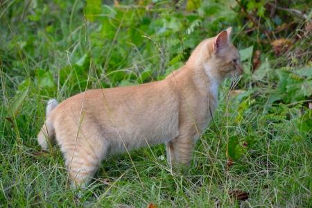 Orange Tabby Cat Фото со стока