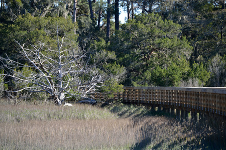 disappears: Curving Boardwalk over the marsh disappears into the woods Stock Photo