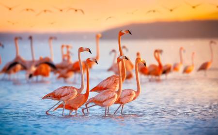 pink flamingos at sunset Archivio Fotografico - 101094840