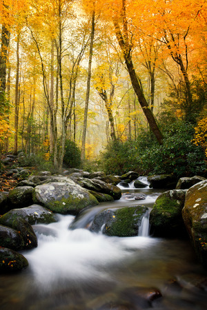 Streams during fall