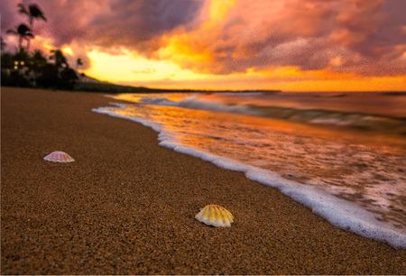 Hawaiian beach 免版税图像