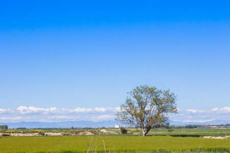 A lonely tree in the countryside with grass in the floor, and a beautiful blue sky filling the empty space in the scene 写真素材 - 128781435