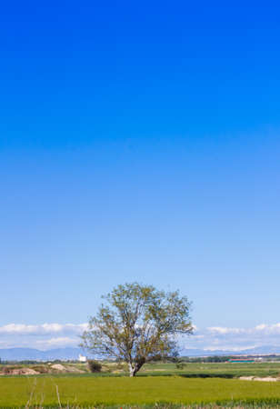 A lonely tree in the countryside with grass in the floor, and a beautiful blue sky filling the empty space in the scene 写真素材 - 128781439