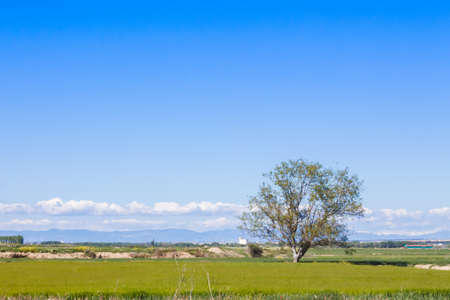 A lonely tree in the countryside with grass in the floor, and a beautiful blue sky filling the empty space in the scene 写真素材 - 128781448
