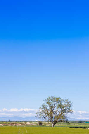 A lonely tree in the countryside with grass in the floor, and a beautiful blue sky filling the empty space in the scene