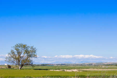 A lonely tree in the countryside with grass in the floor, and a beautiful blue sky filling the empty space in the scene 写真素材 - 128781496