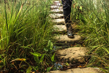 A woman walking into a stepping stone between grass and green stems over a small river