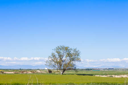 A lonely tree in the countryside with grass in the floor, and a beautiful blue sky filling the empty space in the scene 写真素材 - 128781504