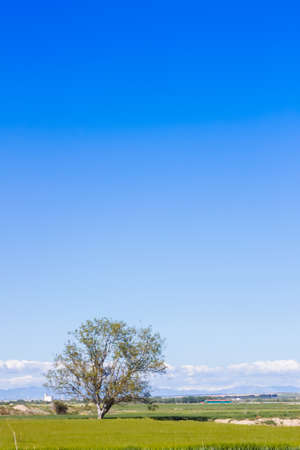 A lonely tree in the countryside with grass in the floor, and a beautiful blue sky filling the empty space in the scene 写真素材 - 128781507